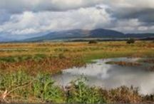 Wild Places / The best places in Dumfries and Galloway to see wildlife