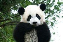 Panda & Friends