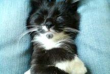 Cats / Friendly felines