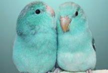 Birds / Beautiful Feathers