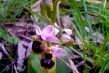 Walking in Salento / Escursione nel Parco di Ugento. Tra rare orchidee selvatiche e la gialla ginestra abbiamo scopertoun luogo meraviglioso