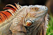 Creature_Reptile