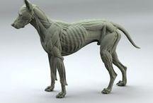 Anatomy_Creature