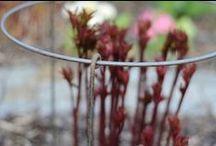 Staudeholdere - plant supports / Staudeholdere der sikrer at dine planter står oprejst i regn og blæst.
