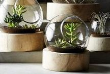 Nature Inspired Decor ~ Ideas to Bring Nature Indoors / Rooms and spaces inspired by nature. Decorating ideas or projects that help bring the outdoors inside.