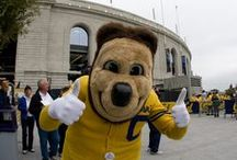 The Oski Tradition / Oski is Cal's greatest tradition. He is always there to support his fellow bears, give high-fives to fans of all ages, and represent bear territory.  This board is dedicated to the best mascot in college athletics. GO BEARS!    / by University of California Golden Bears