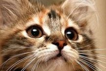 Kitty Cats / Everything about our furry feline friend.