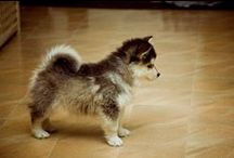 Dog Breeds / Different types of dog breeds around the world.