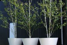 Plants, planters and vases