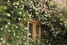 Scenaries & gardens / If you have a garden and a library, you have everything you need. Marcus Tullius Cicero