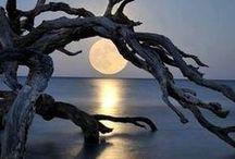 Sun ray/Moon glow / by Michelle Simpson