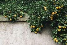 Laranja | Orange /  Crie um ambiente alegre e jovial em sua casa com este perfume simultaneamente cítrico e doce: um aroma vibrante e refrescante a laranjas sumarentas que traduz a essência de um dia de verão em Portugal | This vibrant and refreshing sweet orange fragrance truly captures the essence of a portuguese Summer day. The juicy citrus scent bursts forth creating a happy environment full of laughter