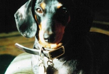 Doxie Stuff (Merlin needs a category, too!) / by Susan McCulley