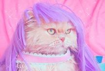 Cats, WTF & lol / by Shamandalie SG