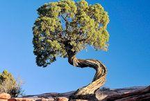 Trees / Bäume sind Gedichte, die die Erde in den Himmel schreibt!