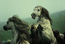 Inspirational Animals / by Lexi Anne Valentyna