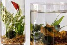 Anna_vodne-rastliny