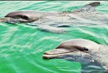 Golfo de Morrosquillos / Tierra de la costa Caribe de Colombia, con una excelente oferta turistica