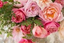 ROSES & ROSES ✿¸.• / by Marilene F.Lourenço