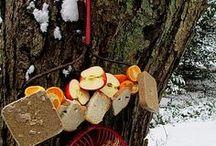 silvana / erbe aromatiche - cibo - ambiente - natura - mobili naturali