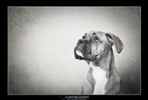 FURRTOGRAPHY FINE ART PET PORTRAITS / Qualified and Award Winning Fine Art Pet Portraits, covering Manchester and the North West of England