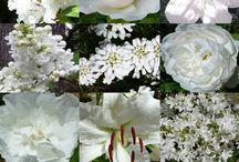 Couleur : blanc / Deco, objets, fleurs, couleur : blanc