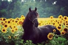 Horses to Dream about / We all dream about the perfect horse, and some not so perfect but with great personalities.