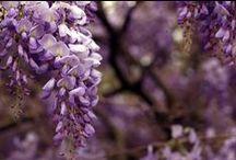 Biogiardino / news e realizzazioni di giardini biodinamici