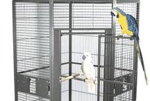 Medium Bird Cages / With so many choices, choosing the right bird cage for your medium size parrot can sometimes be challenging. Our Bird Cage Buying Guide can help!  Cockatiels, small Conures, Lories, Caiques, Quakers, Indian Ringnecks, Pionus, Senegals, whatever medium size parrot you have, Bird Cages 4 Less has the perfect cage for you! All of our medium bird cages are tested by independent laboratories and are certified non-toxic and bird safe.