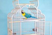 Large Bird Cages / Bird Cages for Large Birds!  Finding an adequate, large bird cage for your African Grey, Macaw, Cockatoo, and other similar large parrots can be challenging. Large parrots mean wide wingspans, and you want to be sure to make the best cage buying choice for your feathered friend!