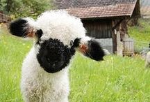 ... I also love sheep... / More animals I love  / by Kathleen Wallace