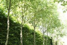 Jardins e Varandas #