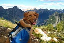 Para los perros viajeros