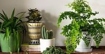 Indoor Plants & Garden