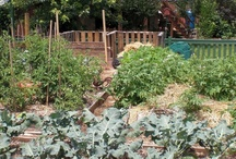 Our Permaculture Program / Pictures of our permaculture demo site at Cedar House Inn and Yurts bed and breakfast. We have an organic vegetable garden as well as over 30 varieties of fruit and berries. #permaculture #georgia #dahlonega #gardening #organic / by Cedar House Inn & Yurts