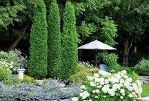 puutarha --Garden