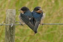 haluan kuulla laulua..linnut ja perhoset