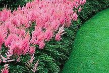 Fine gardening / Love beautiful gardens / by Susan Bobb