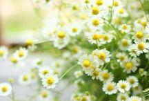 Das flores que eu amo