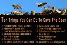 Save the Bees / Bees pollinate the plants that produce food for all of us. Unfortunately the bees are dying in record numbers.