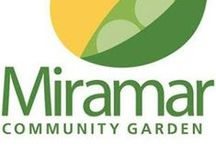 #OurMiramar Gardens / The City of Miramar is proud to be promoting growing local fresh fruits and vegetables in our Miramar Community Garden. Where we share Tips and information on gardening and sustainable living in Miramar, Florida. Enjoy the tranquil beauty of the Botanical Garden in the courtyard between City Hall and the Miramar Cultural Center. The perfect place to unwind and relax with nature or host a  beautiful event.
