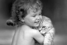 Cats / Cats....
