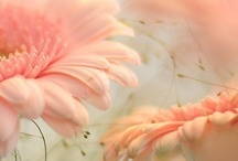 Birdies & Blooms / by Epiphany Imagery