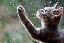 Raining Cats & Dogs / by Jill Moberley