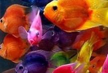 Colors / by Nancy Goldstein