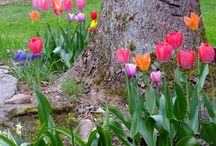 Outdoor: Flower Garden / Why not stop and smell the flowers once and a while! Even the stinky ones are nice!