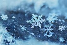 Holiday: Winter