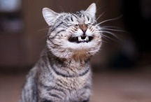 Funny & Furry / by Jill Moberley