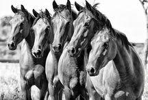 Pony Express / by Taylour Edmondson