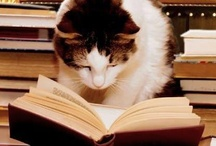 The Literary Cat / by Jill Moberley